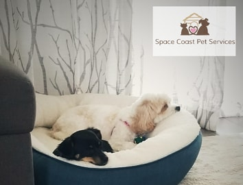 Two dogs in a dog bed with the logo for Melanie Haynes Pet Care